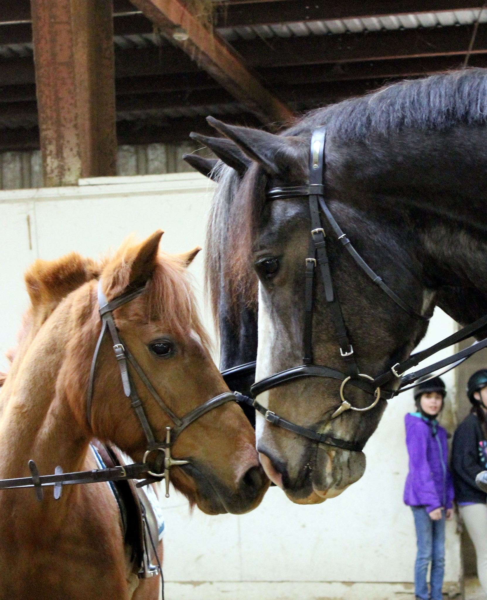 A photo depicting two horses nudging heads