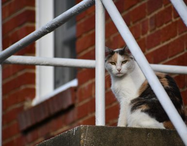 A calico cat sits atop a staircase and surveys its outdoor kingdom.